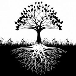 El árbol de la vida: su significado